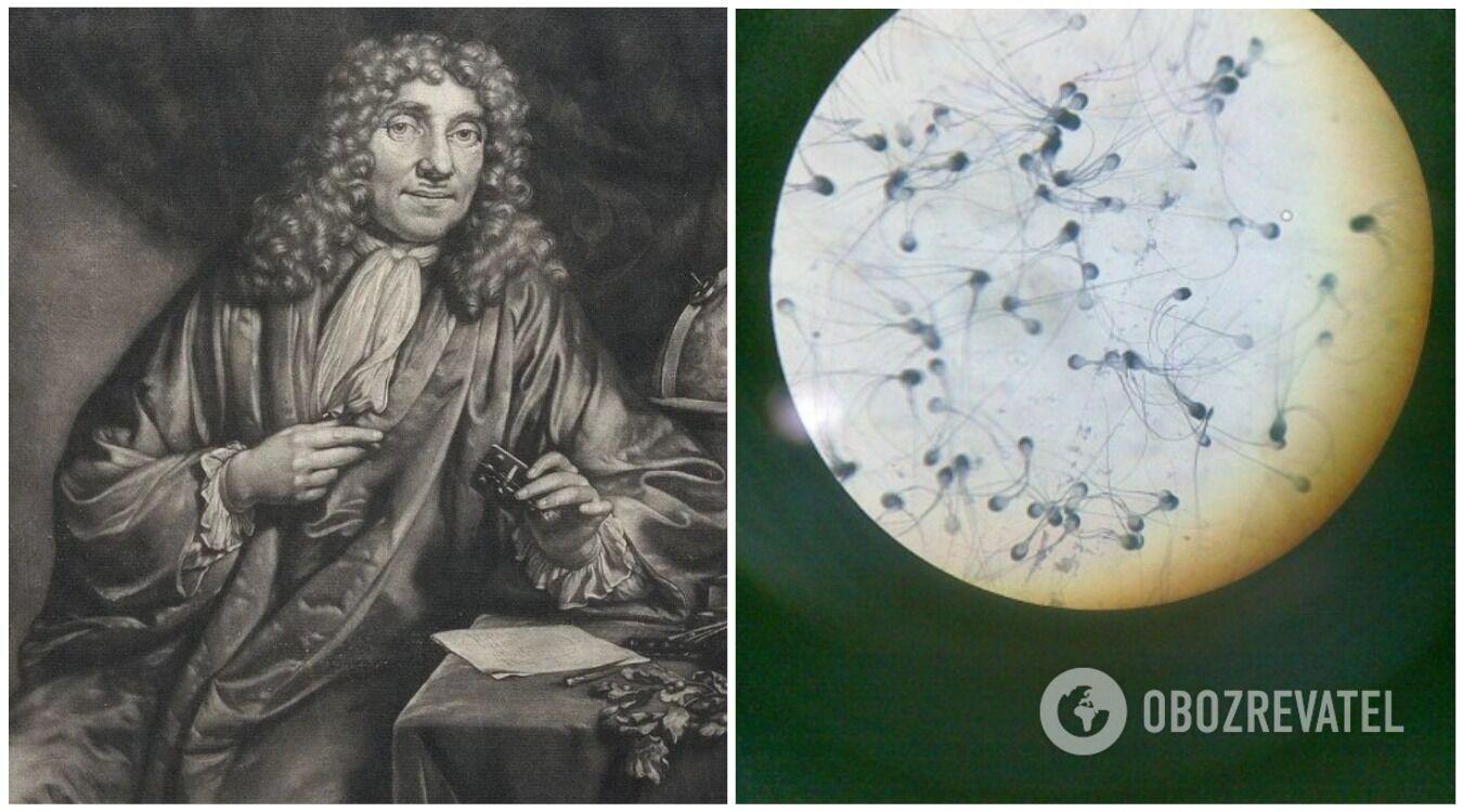 Антони ван Левенгук впервые открыл существование сперматозоидов