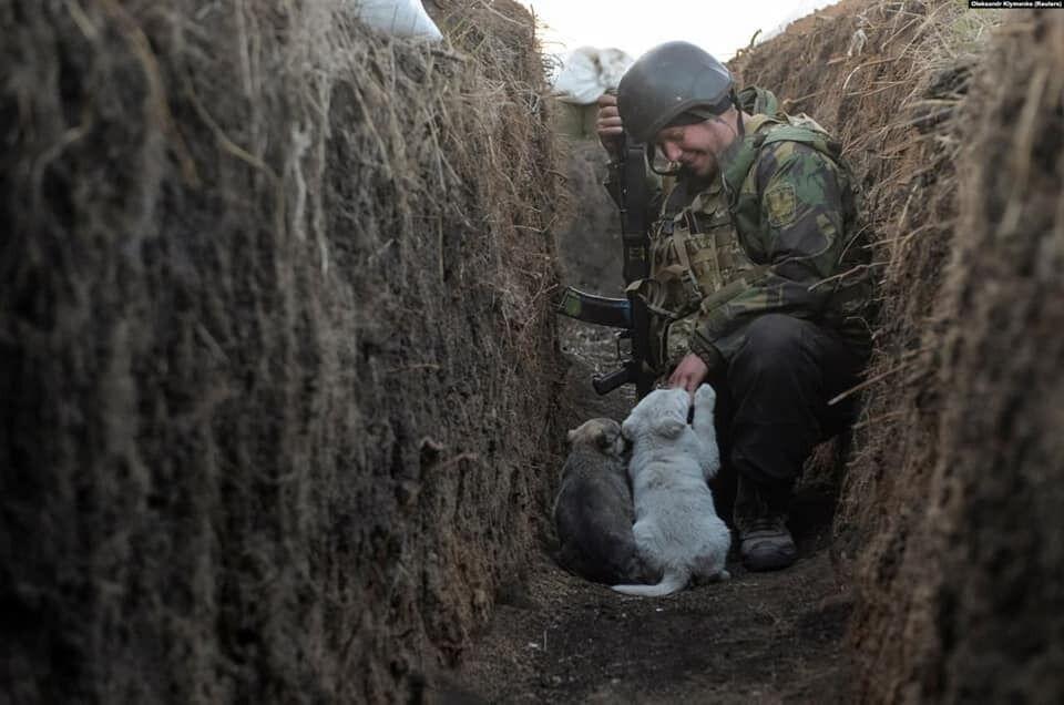 Воїн ЗСУ сидить в окопі з цуценятами
