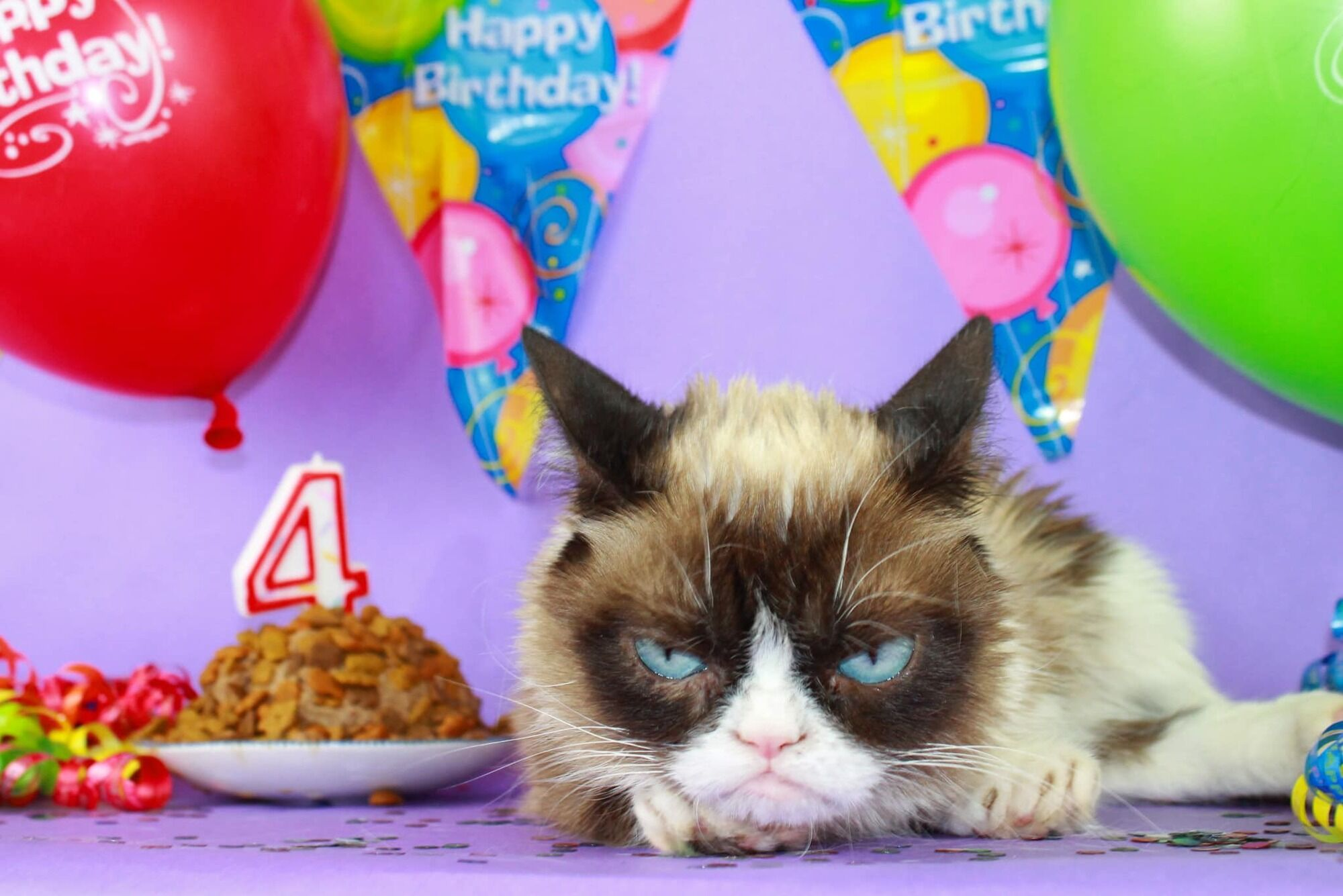 Кішка зовсім не радіє своєму дню народженню.