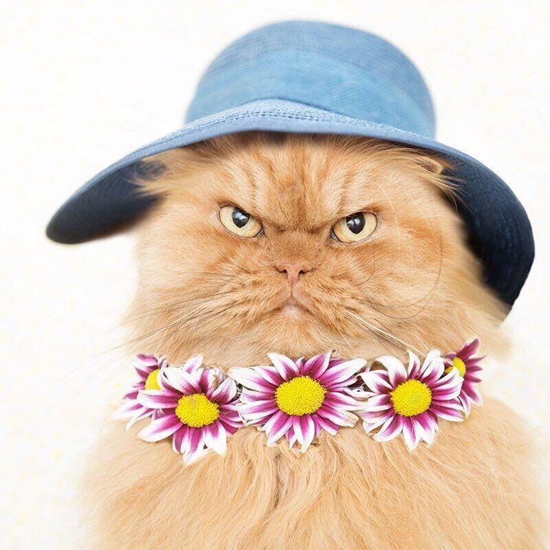 Кіт позує для фотосесії у літньому образі