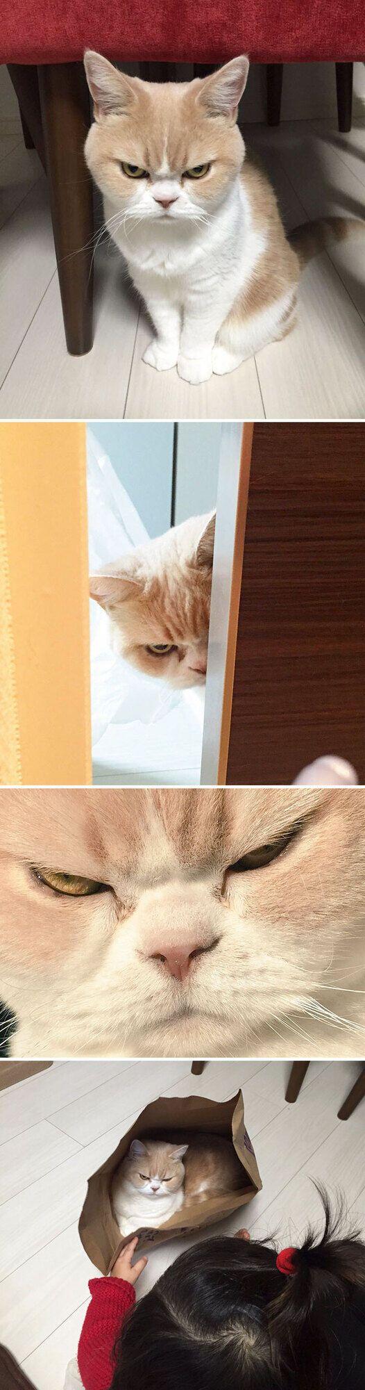 Сусіди бояться його грізного погляду