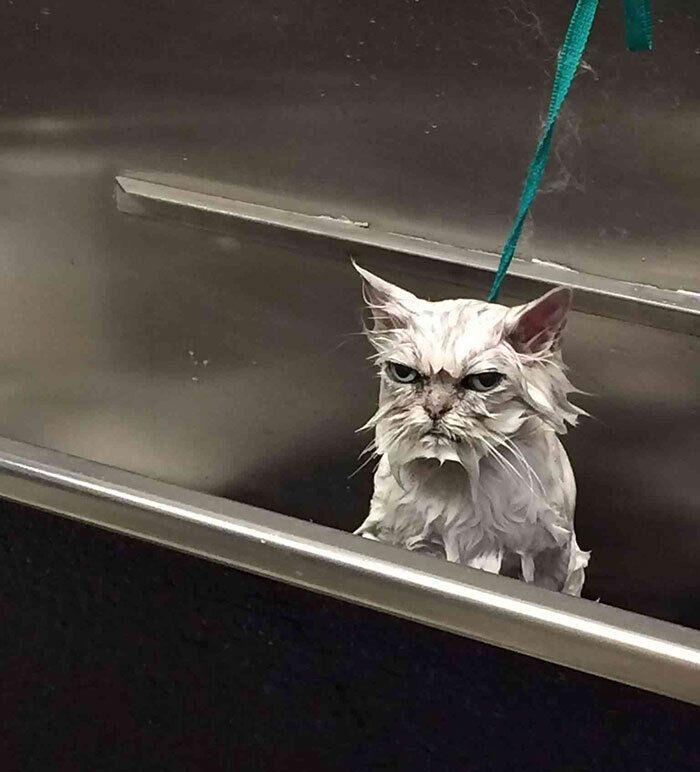 Кіт не любить купатися