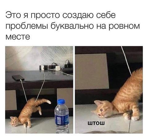 Мем із кошеням