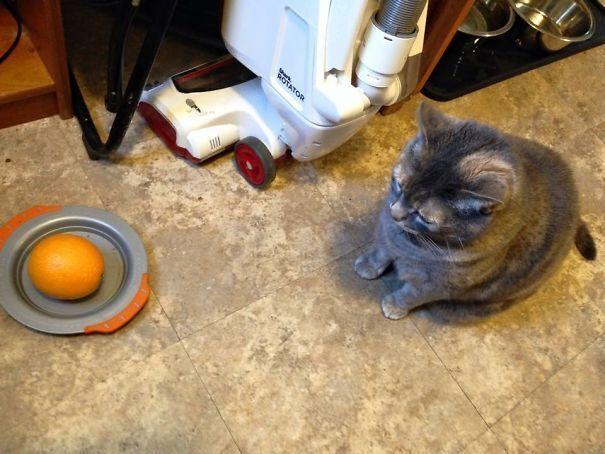Син погодував котика апельсином.