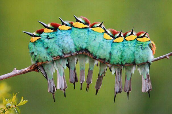 Яскраві пташки сіли в ряд.
