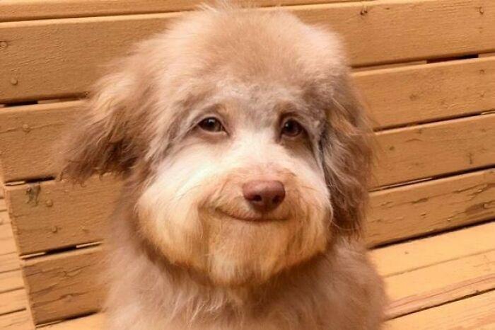 Самый добродушный пес в мире найден