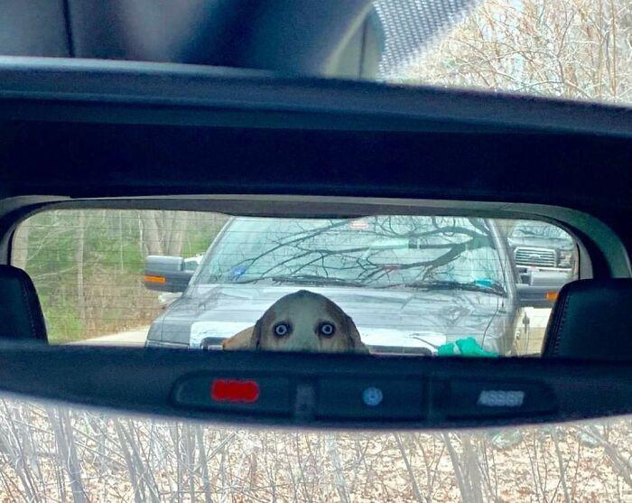 По всей видимости, этой собаке не по нраву поездки на машине