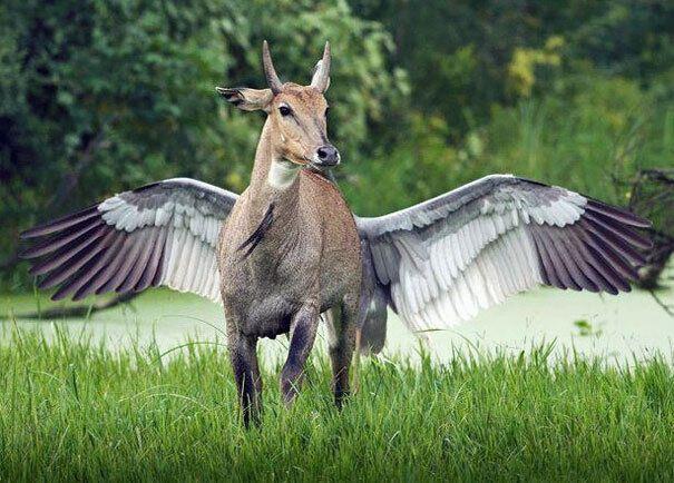Оптична ілюзія з оленям і величезним птахом.