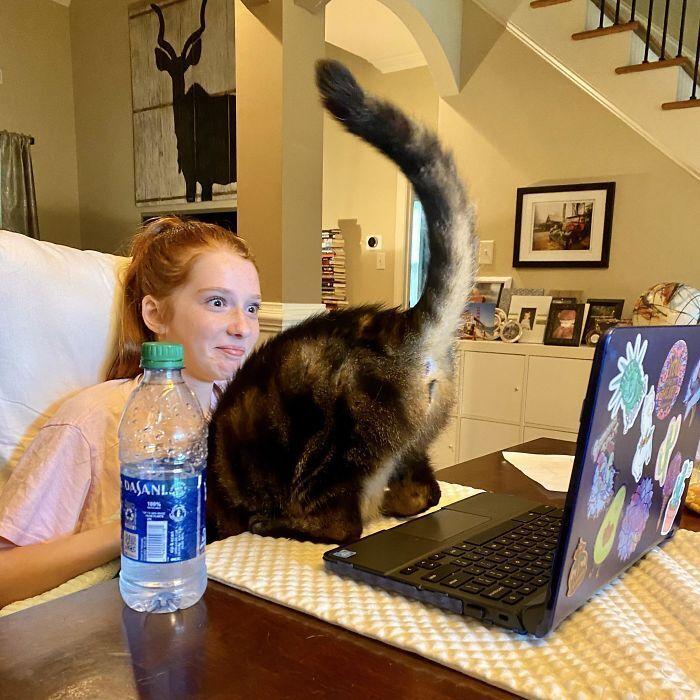 Кіт заважає дівчинці навчатися онлайн