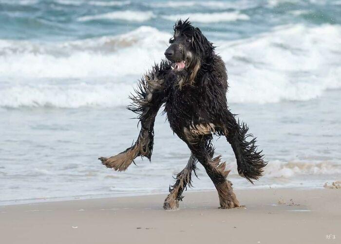 Песика вперше вивели гуляти на пляж