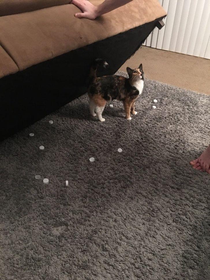 Кот ворует крышки от бутылок.