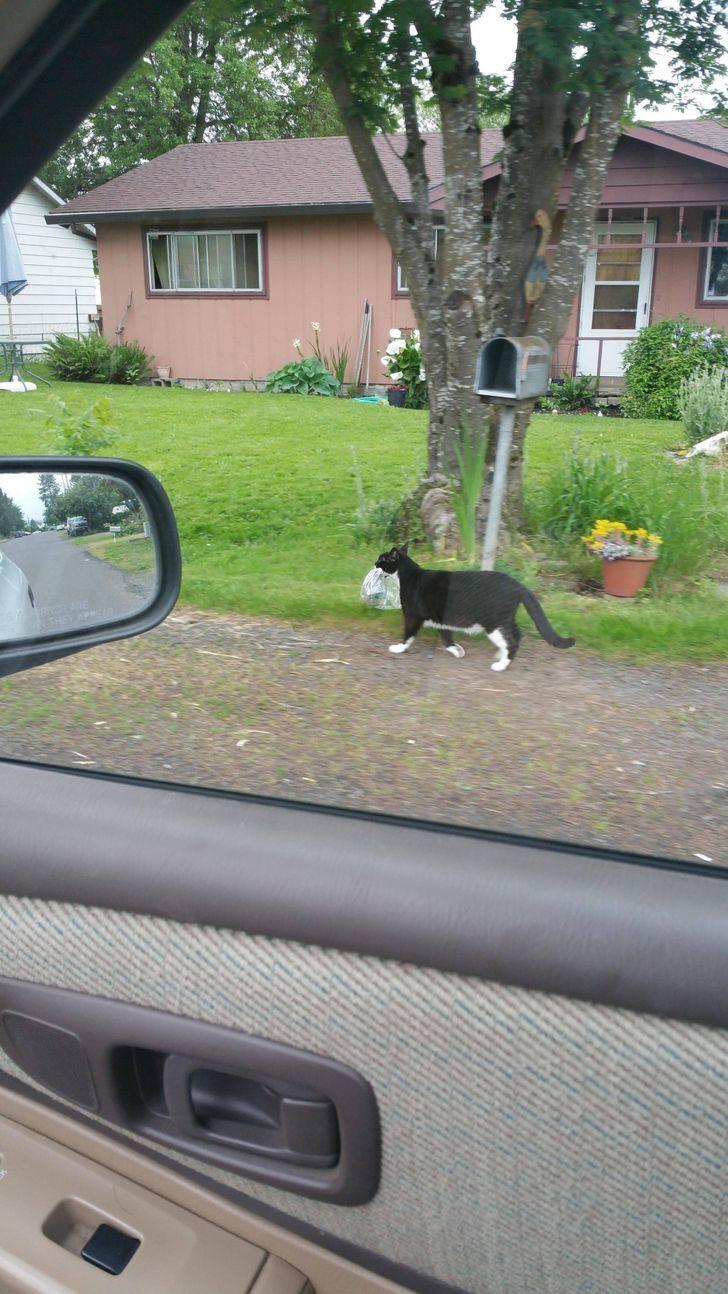 Кот ворует газеты у соседа.