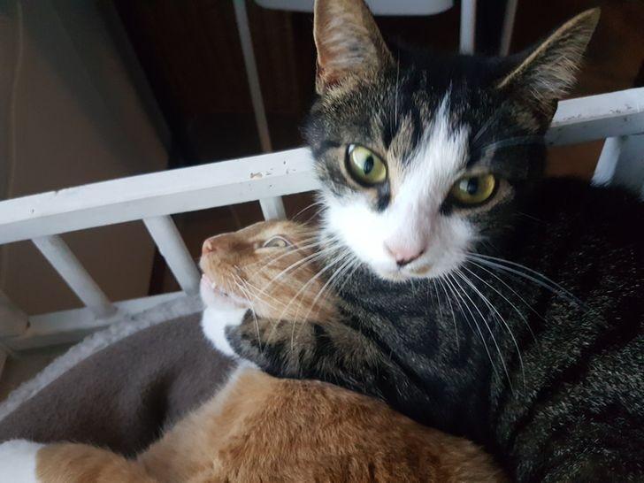 Кот хотел убить своего друга.