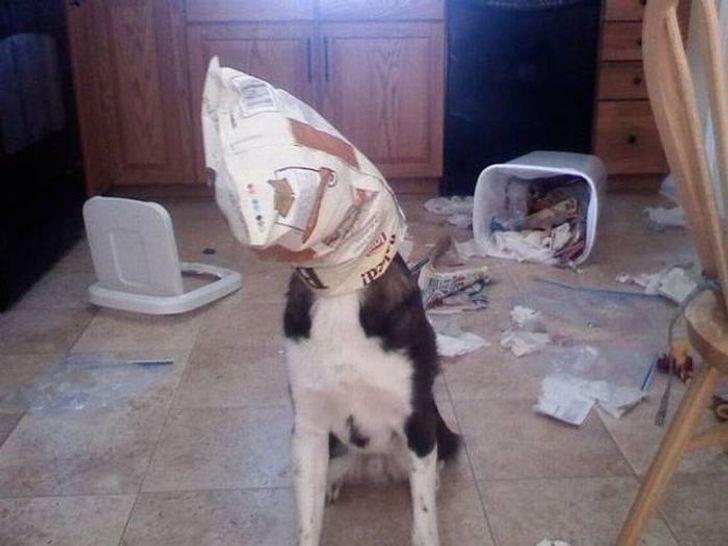 Пес неудачно замаскировался.