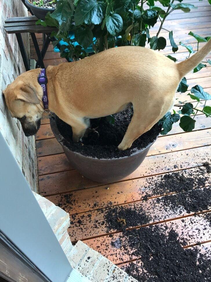 Пса поймали с поличным.