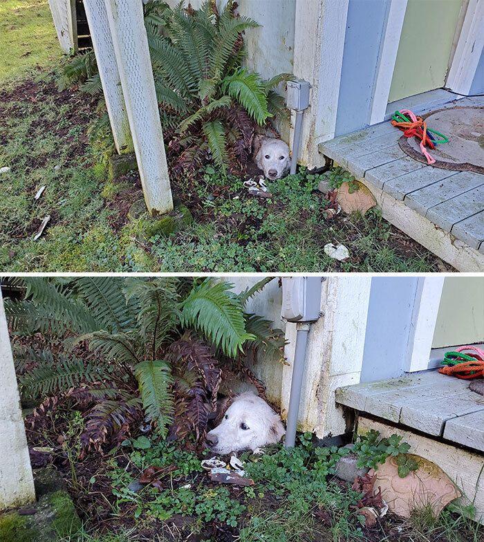 Пес закпопав себе на подвір'ї