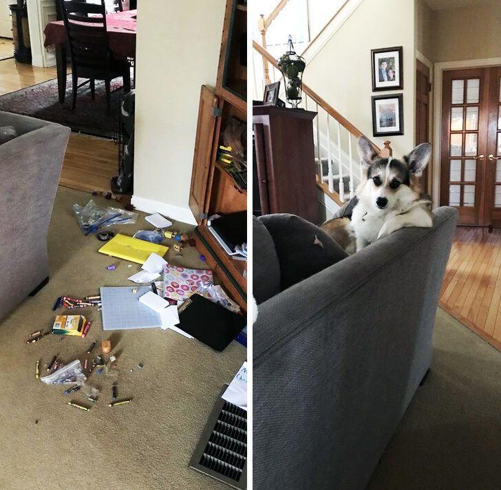 Пес сидит, как будто ничего не произошло.
