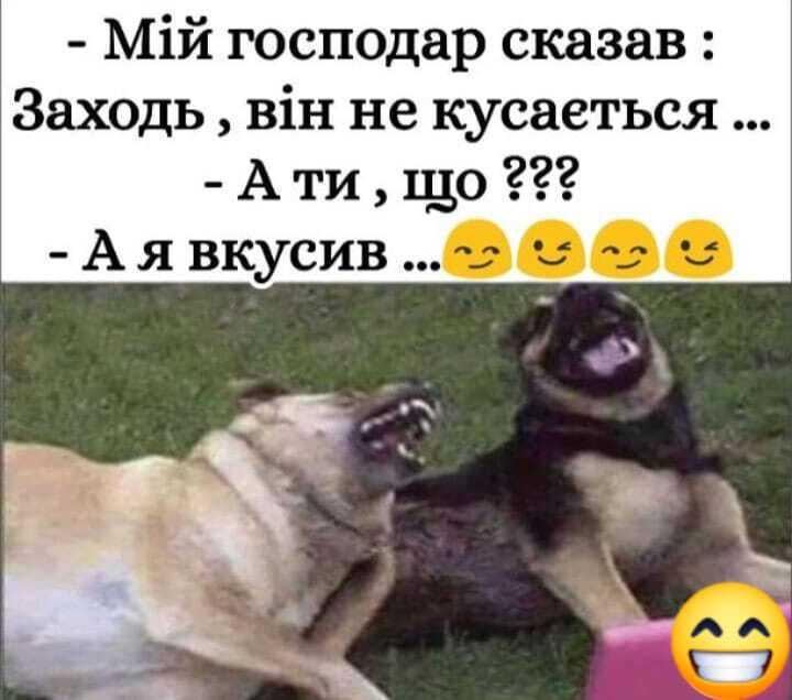 Мем о собаках