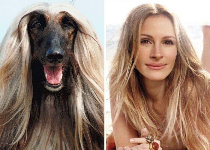 Пес похож на Джулию Робертс.