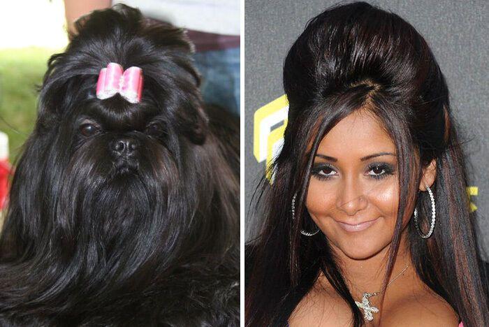 Собака похожа на Николь Полицци.
