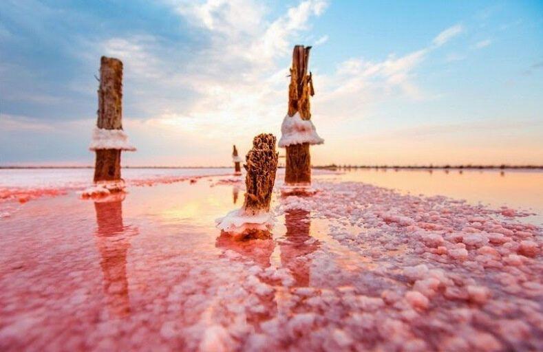 Грязи розового озера имеют большое количество органики.