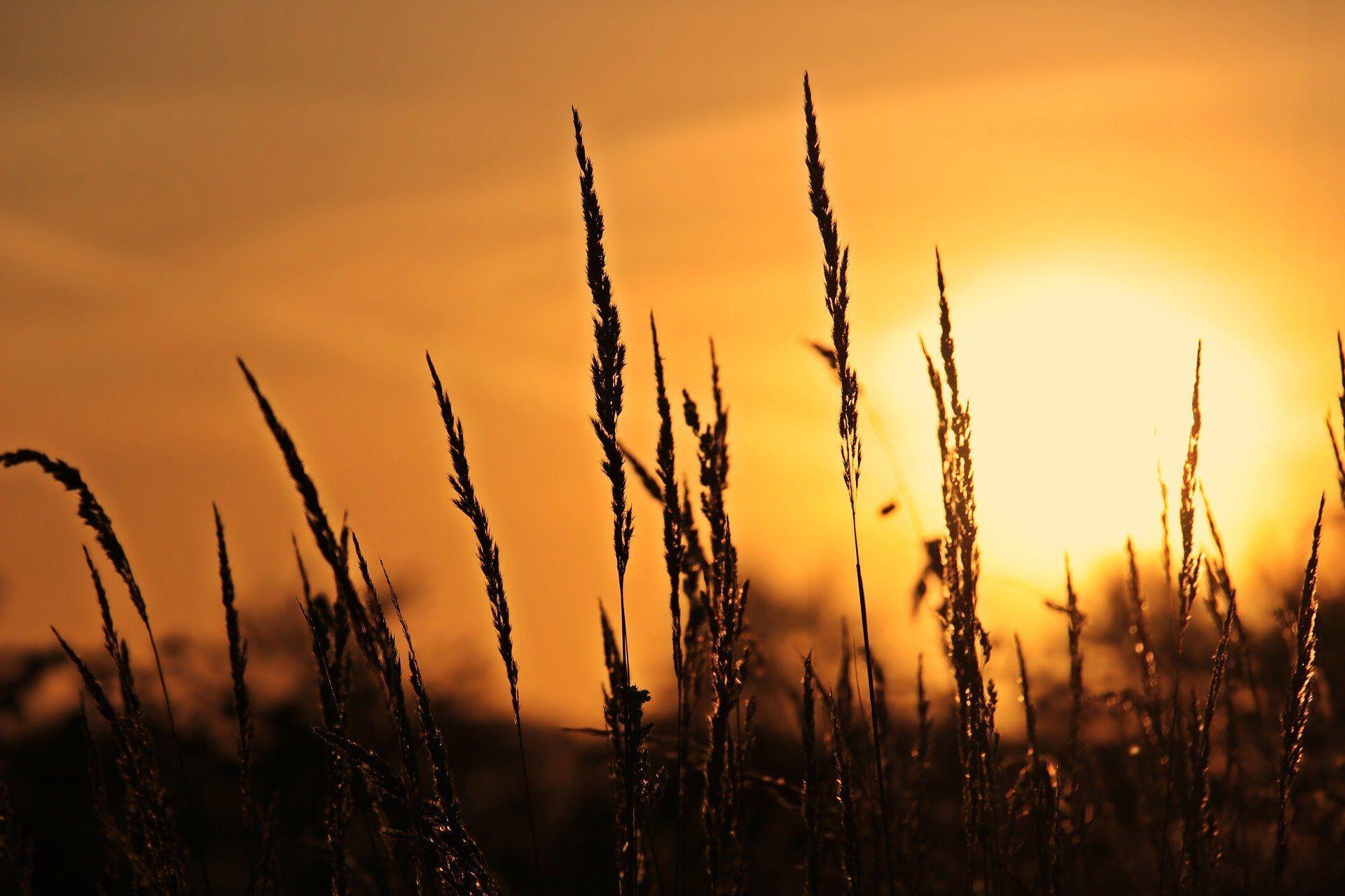 В старину на Василия Теплого люди выходили наблюдать за восходом солнца