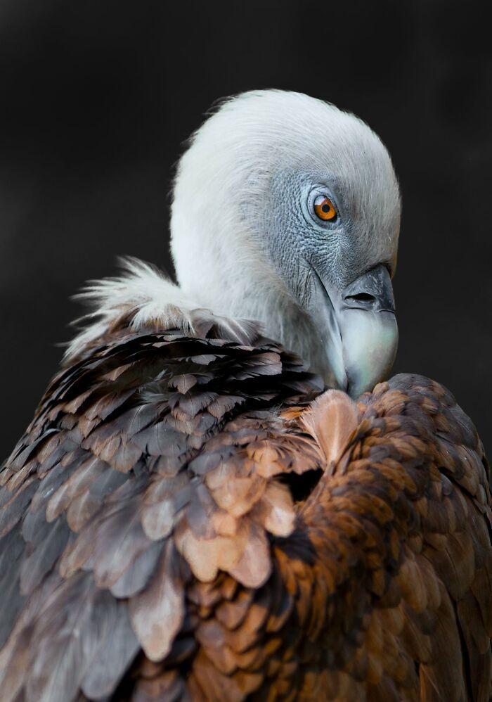 Орел задумав втекти з фотосесії