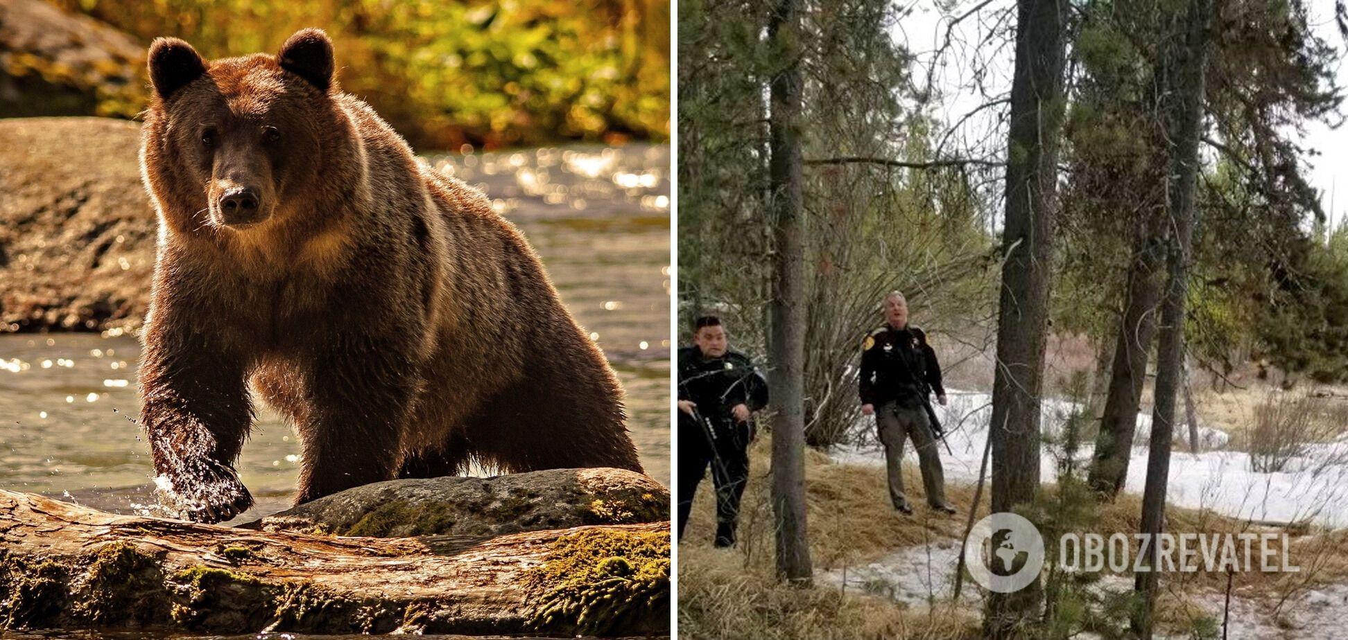 Медведь гризли напал на 40-летнего мужчину