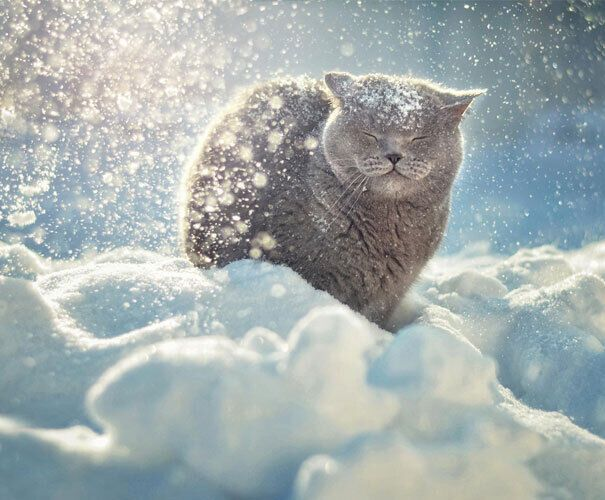 Серый котик играет в снегу