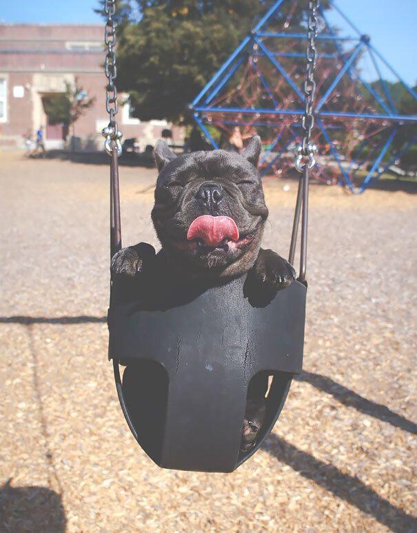 Пес радуется прогулке на детской площадке.