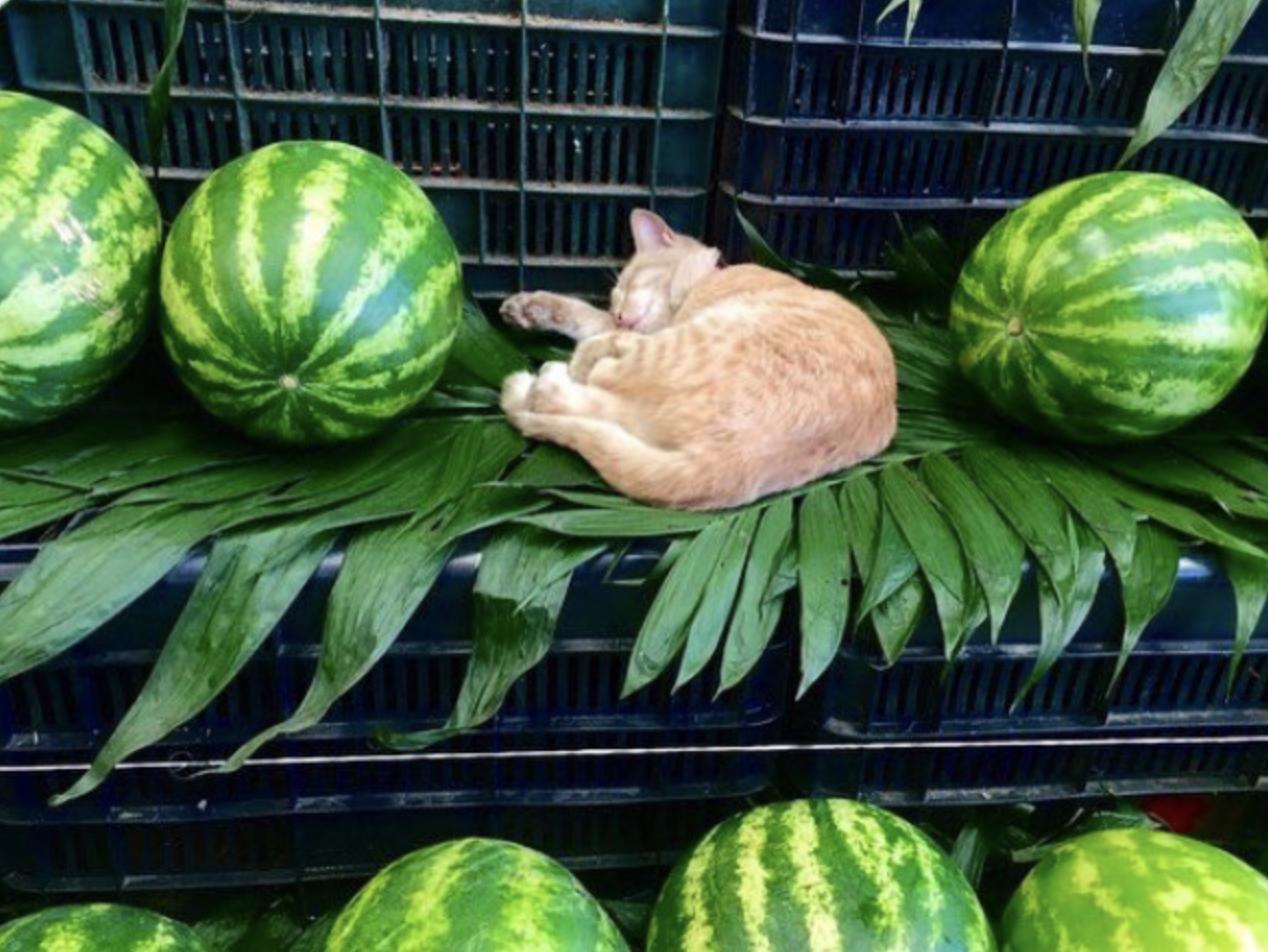 Пухнастий кавунчик на полиці супермаркету