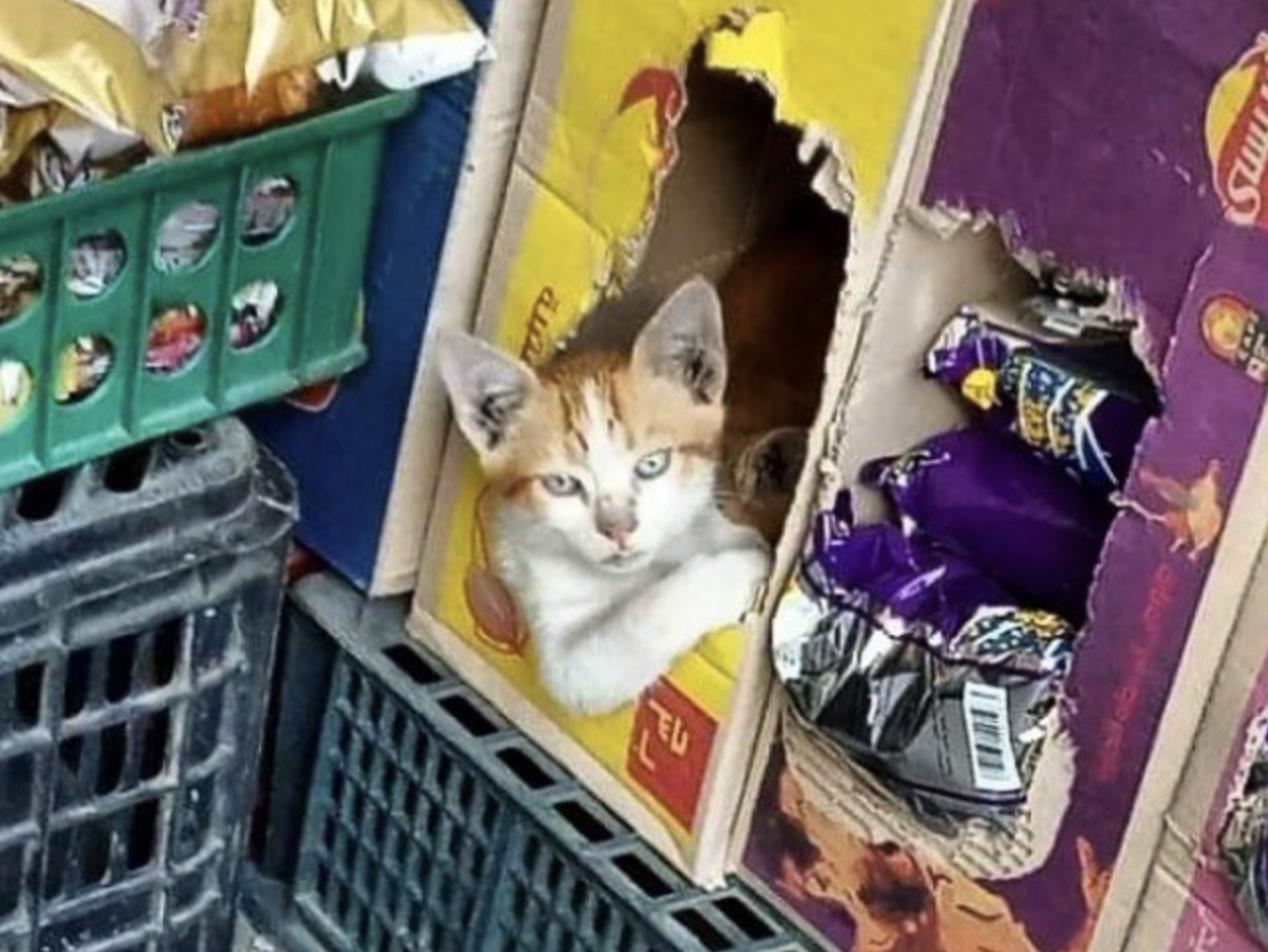 Кіт виглядає із схованки