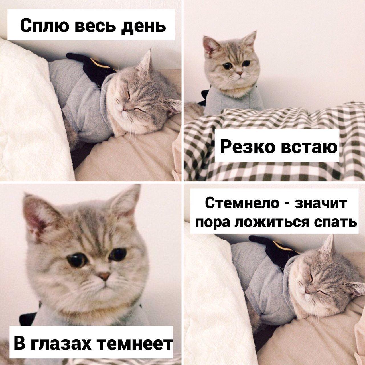Мем із котом