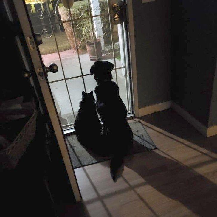 17-річний кіт і 16-річний пес розуміють, що скоро прийде господар