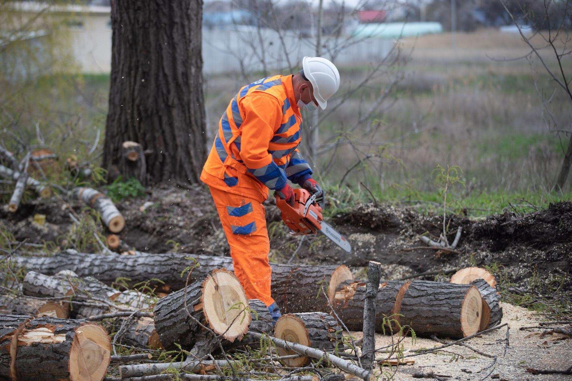 Эта машина будет применяться прежде всего для спиливания высоких и тяжелых деревьев, в том числе и тополей