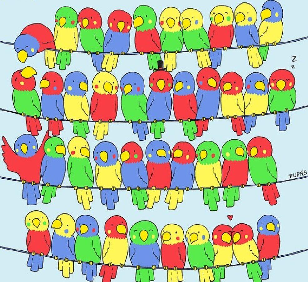 На головоломці зображені хвилясті папуги, що сидять на телефонних проводах.