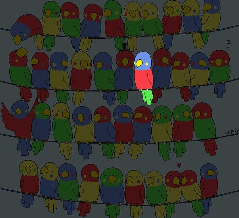 Відгадка на головоломку з папугами
