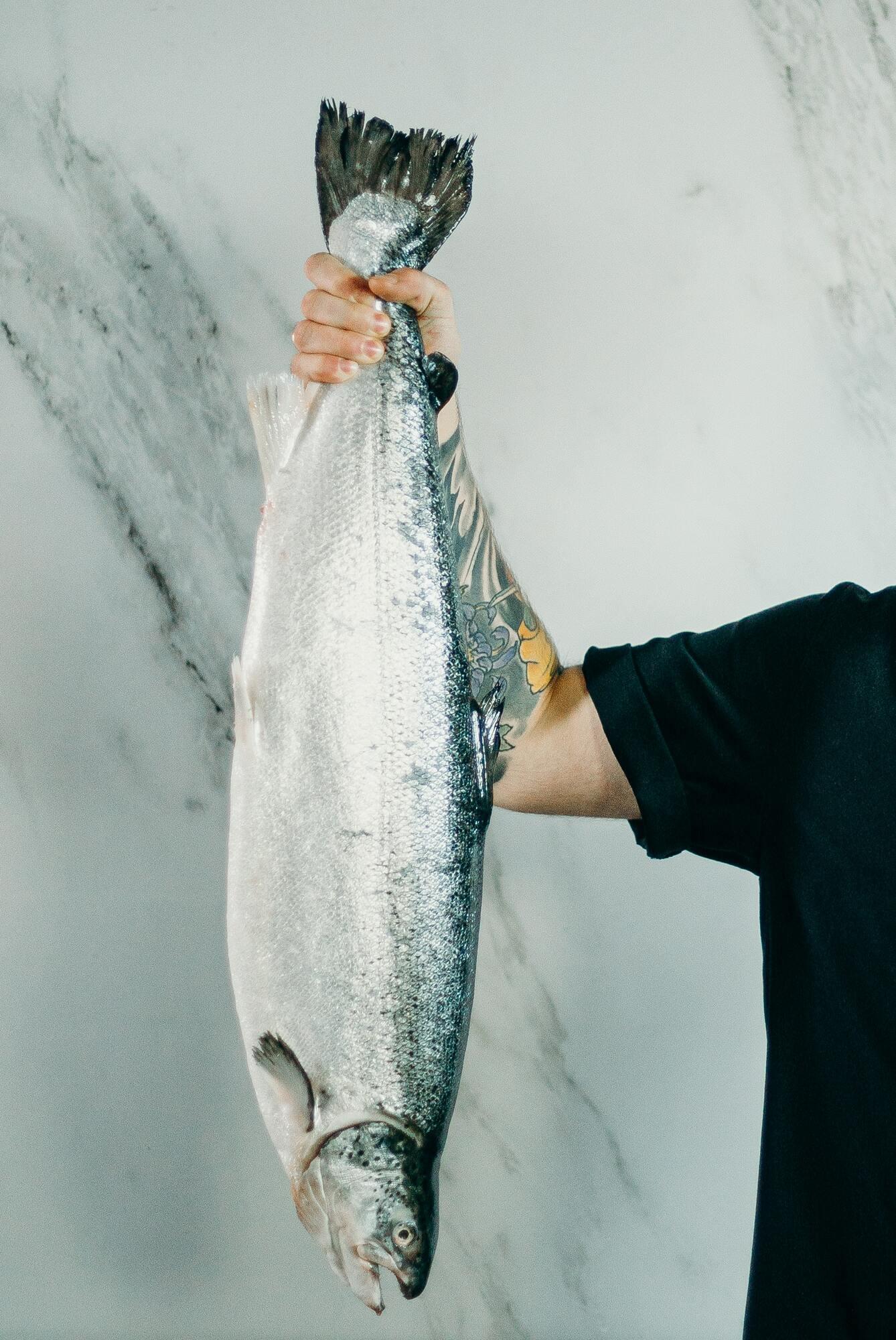 Дикая рыба полезнее искусственно выращенной