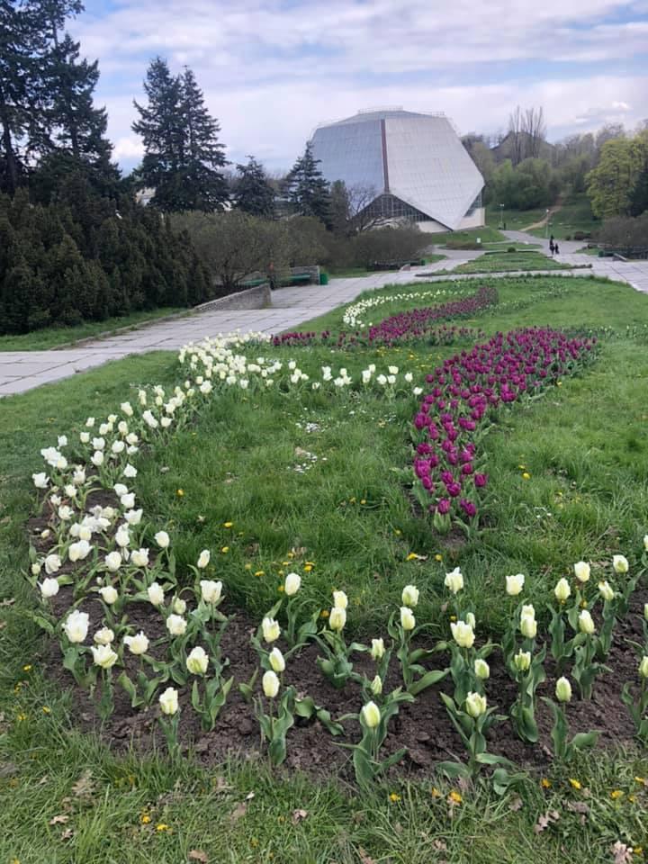 В главном ботсаду страны расцвели редкие тюльпаны.