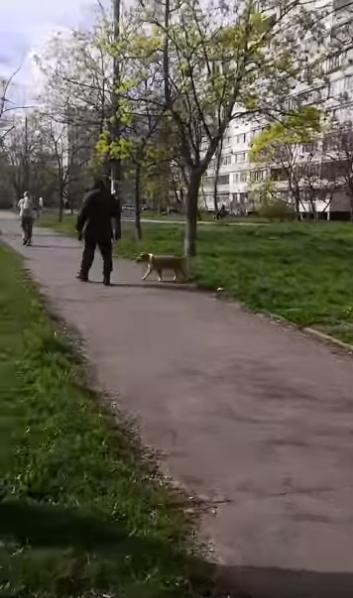 Мужчина уходит с места нападения его пса на собачку