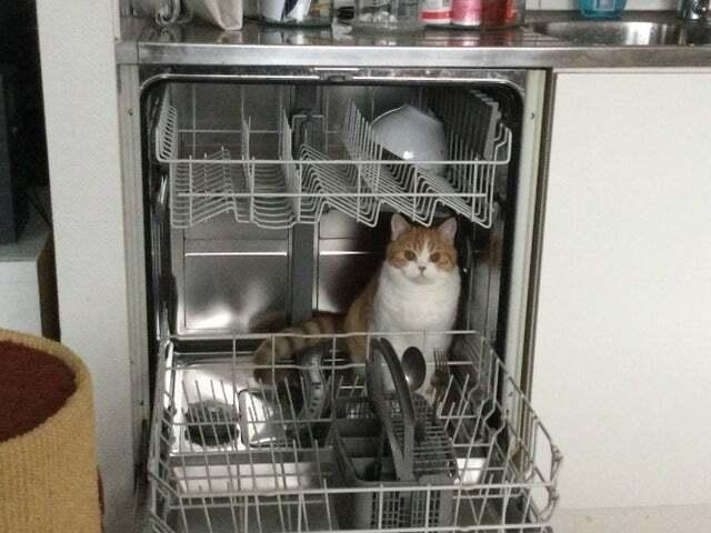 Посудомоечная машина – любимое место котика.