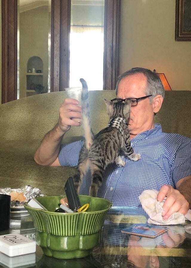 Кот мешает обедать.