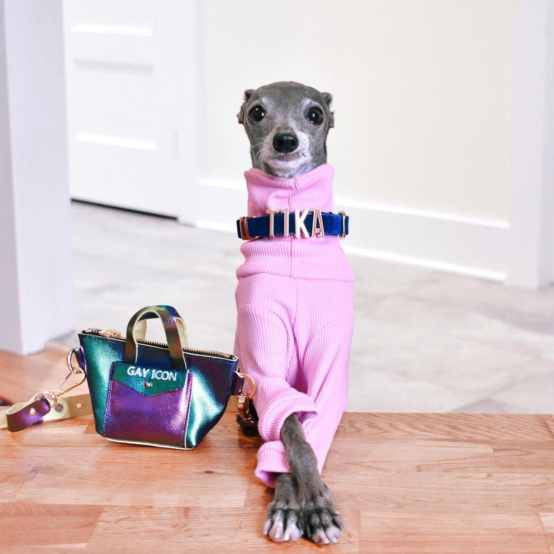 Собака-модник на кличку Тіка став зіркою Instagram