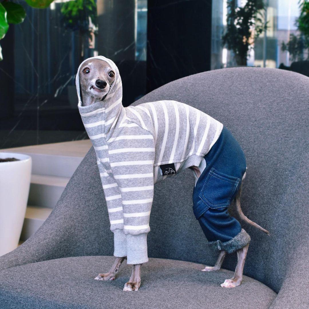 Собака на кличку Тіка позує в модному вбранні