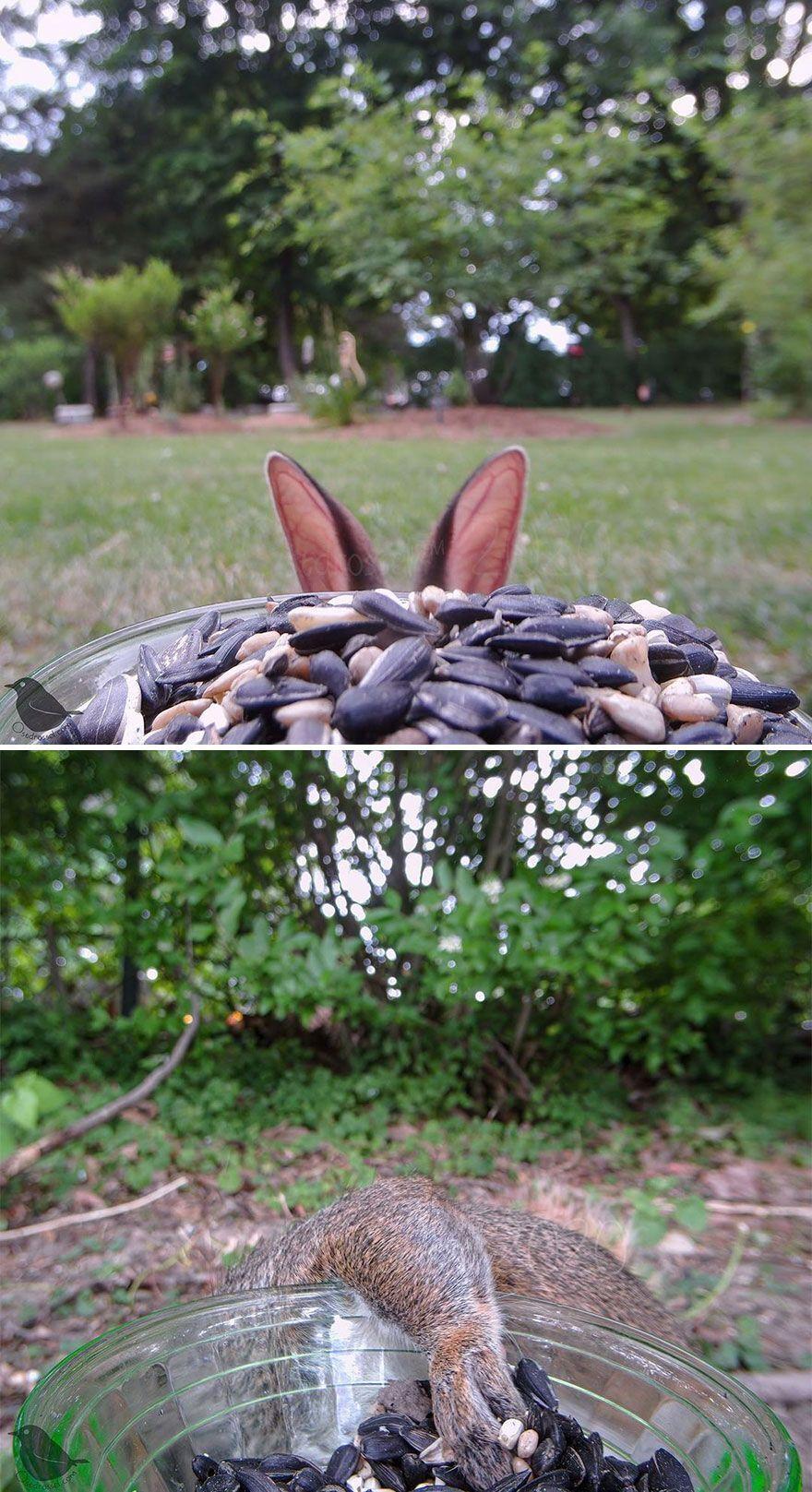 Кролик прячется от камеры.