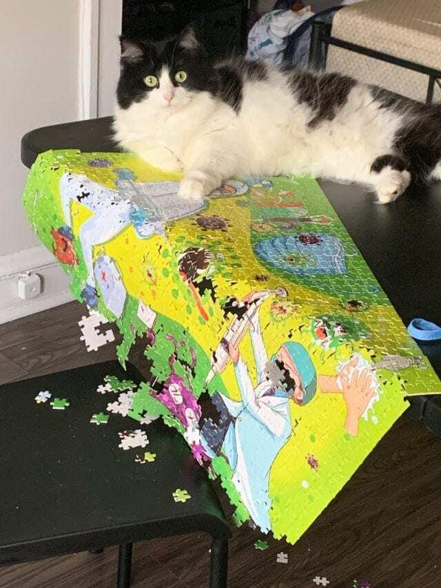 Кот сломал картину с пазлами.