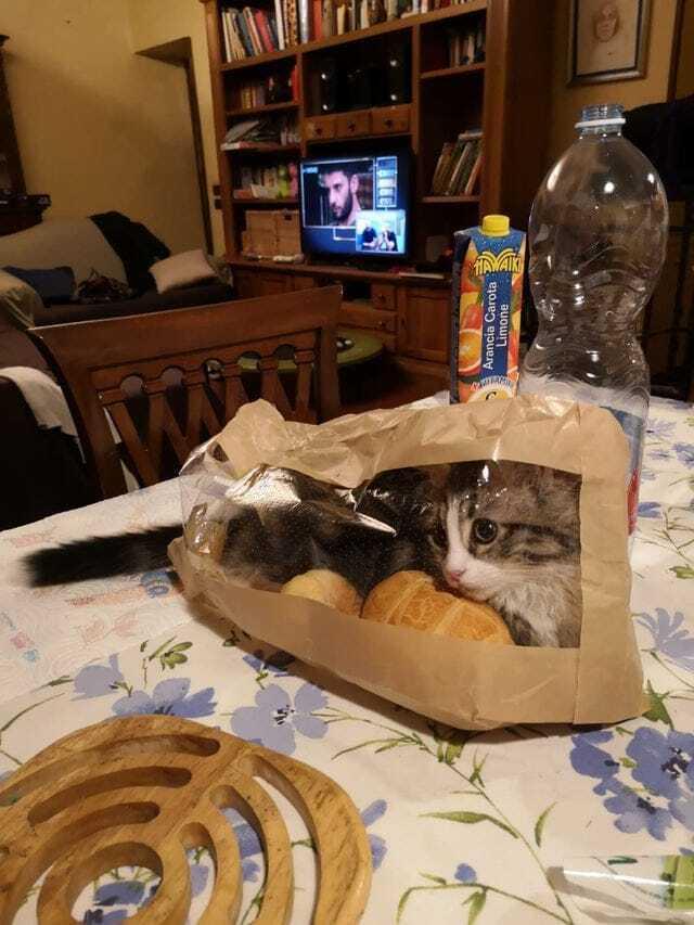 Кот залез в пакет с хлебом.