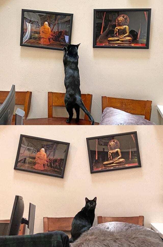Кот не любит картины.