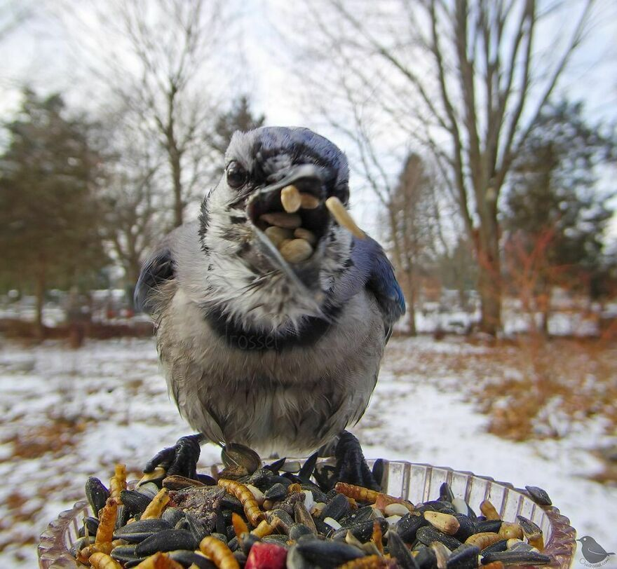 Птица не ожидала увидеть фотоаппарат.