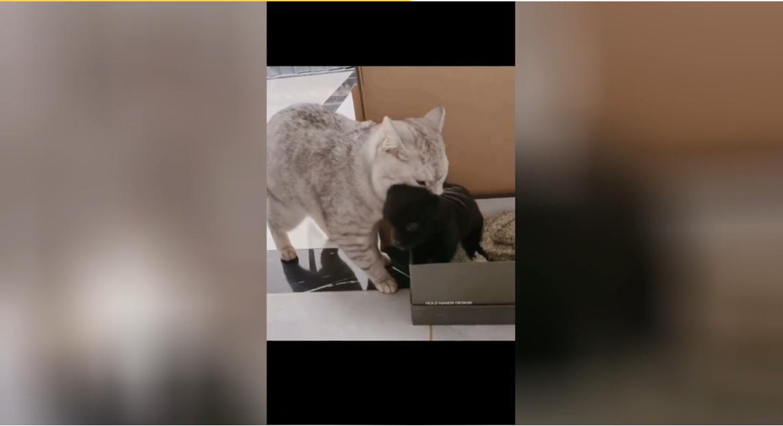 Кошка пытается украсть щенка